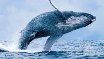 Bitcoin whale Bitfinex