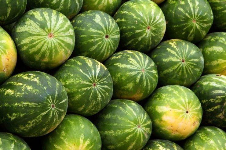 Farmers Water Melon on a FreshChain Blockchain