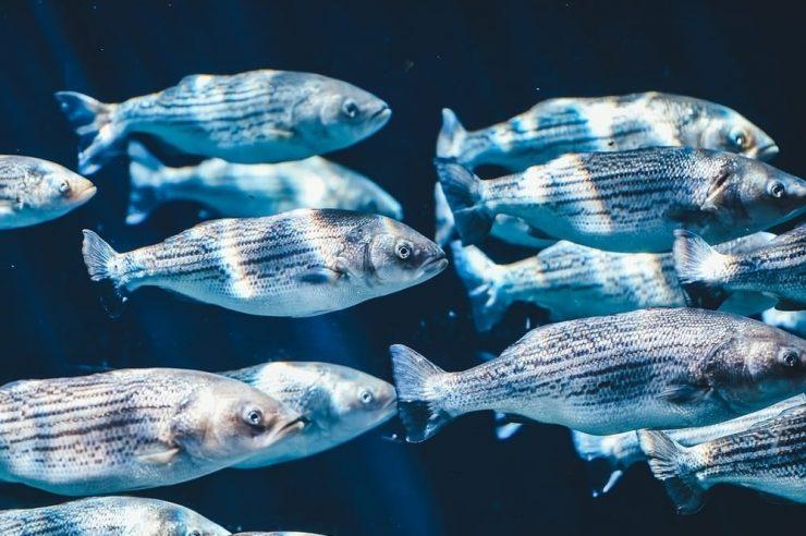 UnionBank WWF Fish Blockchain