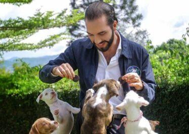 El Salvador Bitcoin Pet Hospital