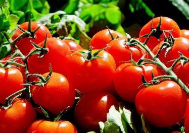 Tokenfarm VeChain Tomatoes Princes