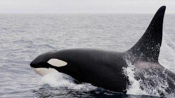 USDT Whale